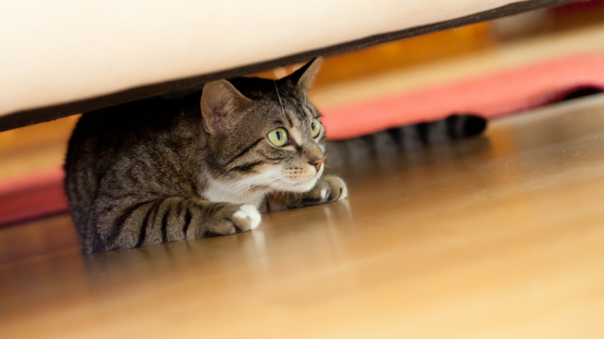Know Your Pet's Hiding Space