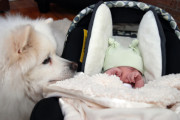 dogwithnewborncarseat