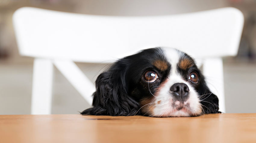 5 Things in Your Kitchen That Can Kill Pets