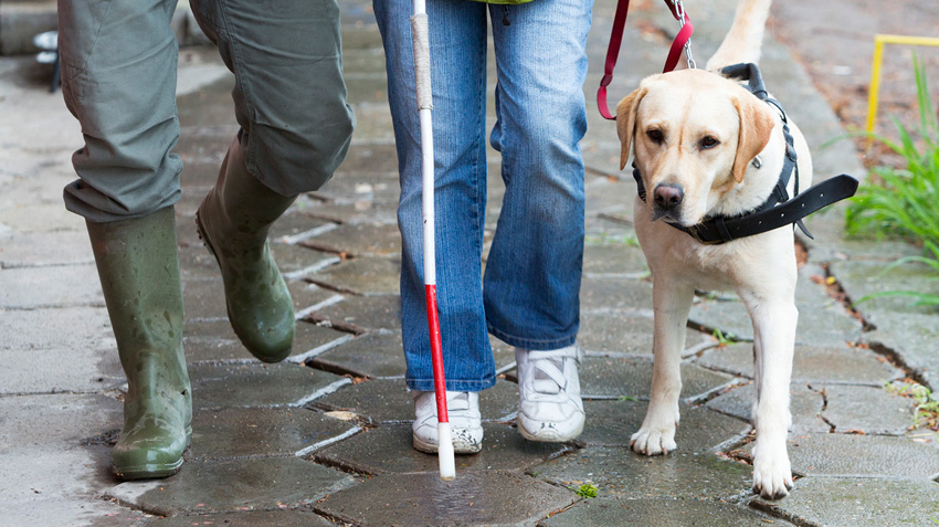Adopting Guide Dogs