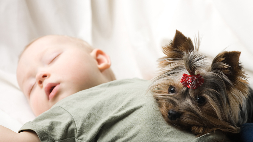 Dogs May Help Boost Infant Health