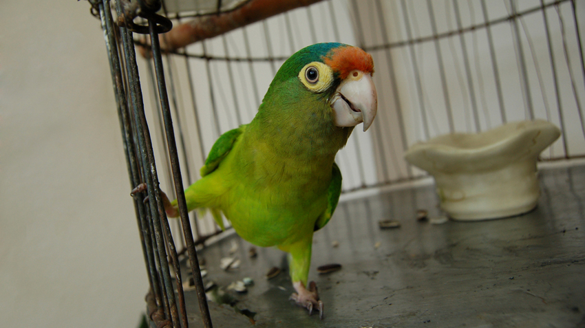 Cancer in Avian and Exotic Pets