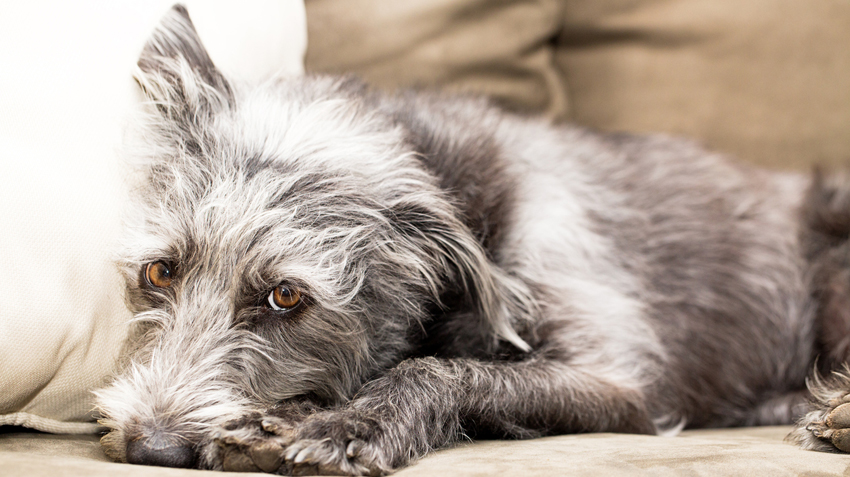 5 Best Vacuums for Pet Hair