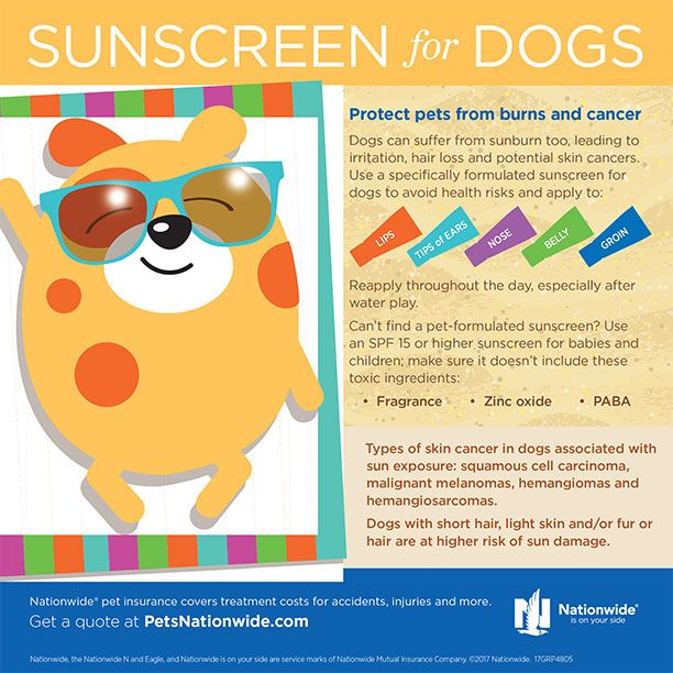 dogs-sunscreen-extras