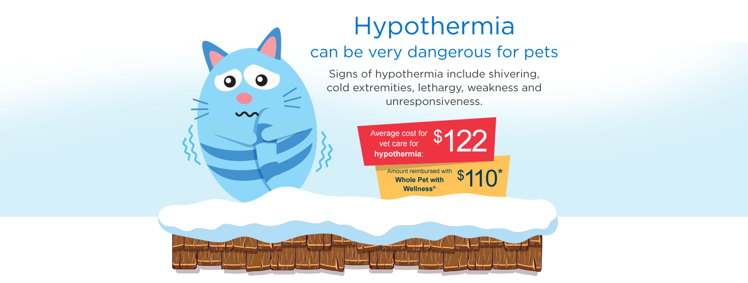 Hypothermia can be very dangerous for pets. Signs of hypothermia include shivering, cold extremetiies, lethargy, weakness and unresponsiveness.