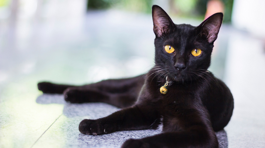 Misconceptions about Black Cats