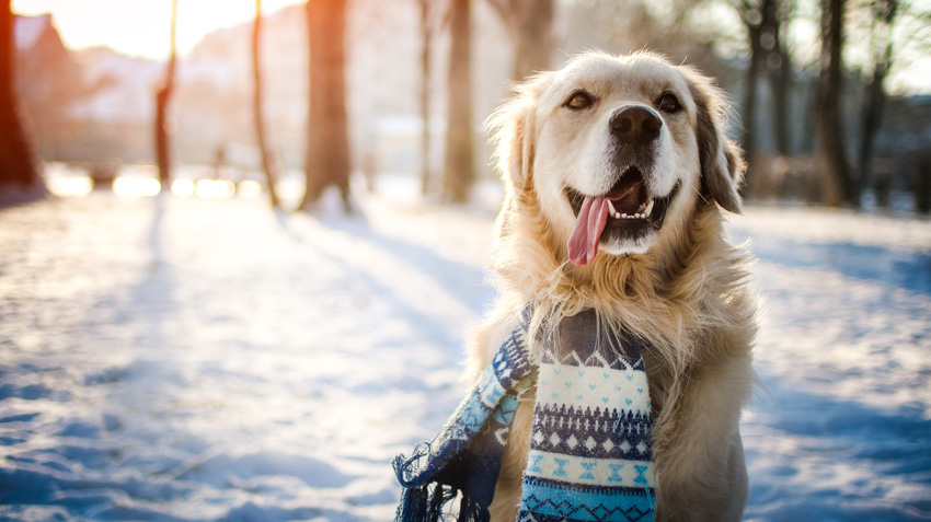 Winter Heartworm Prevention