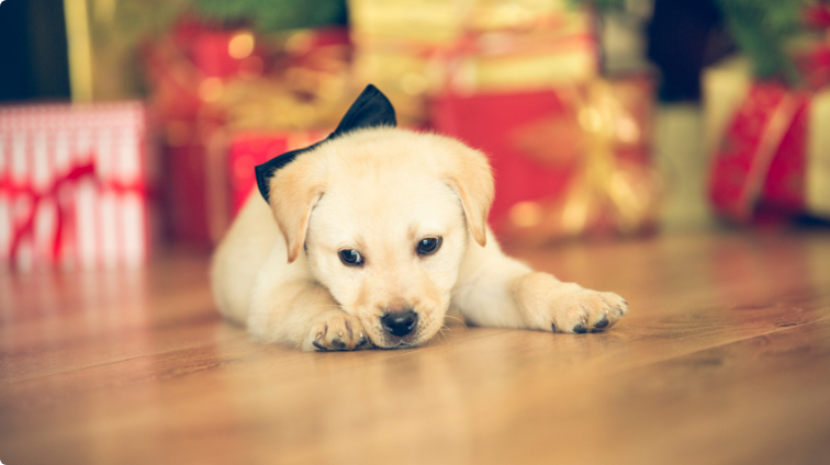 5 Tips Before Buying a Pet as a Gift