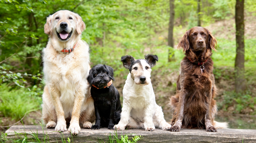 5 Tips for Choosing the Right Dog Breed
