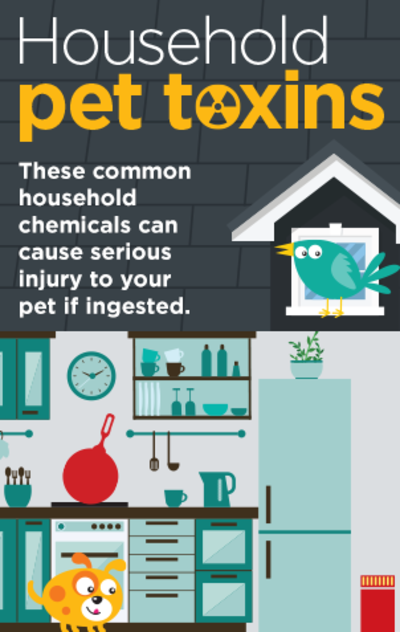 Household Pet Toxins Infographic