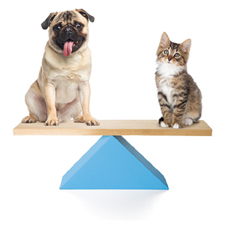 Buyers Guide seesaw pets