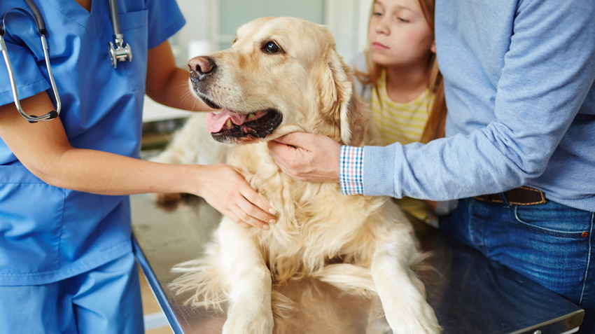 Stem Cell Treatment for Dogs