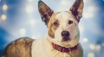Best Pet Photography Tips for Holiday Cards