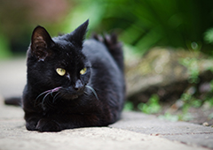 BlackCatMisconceptions2 (1)