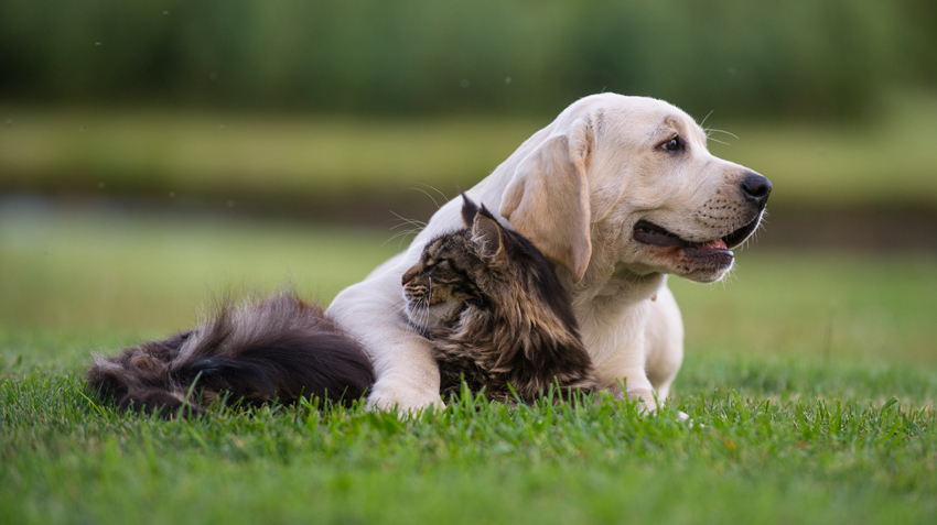 10 of the Best Cat Breeds for Dogs