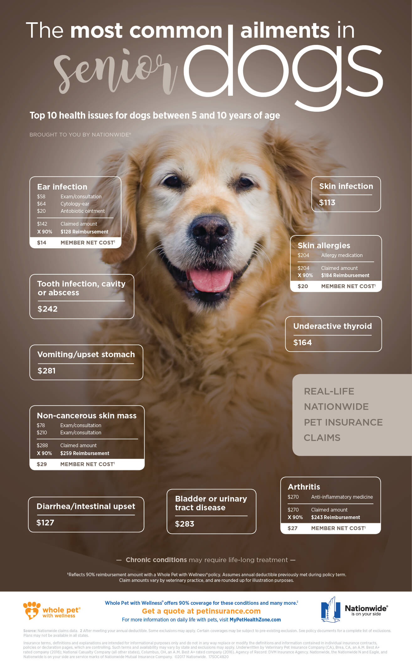Most Common Conditions in Senior Dogs Infographic FNL