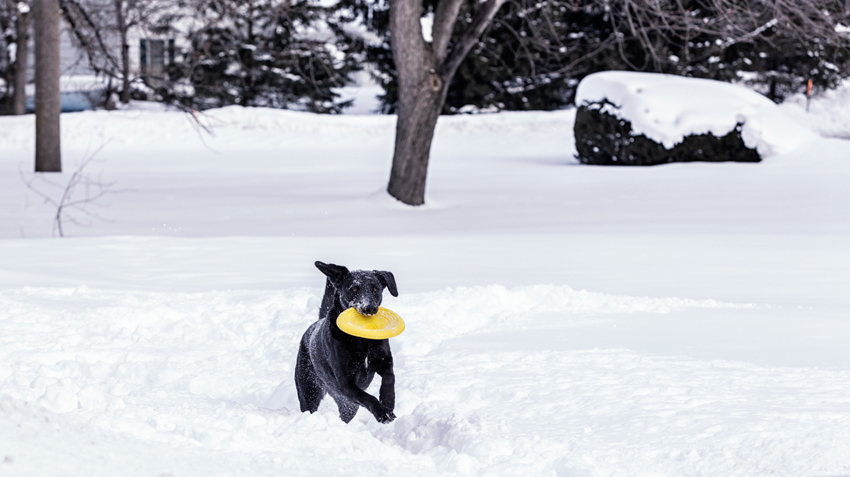 Exercising Your Pets in Cold Climates