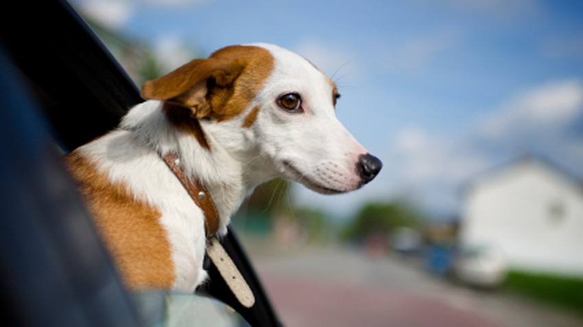 Top 5 Pet Travel Tips