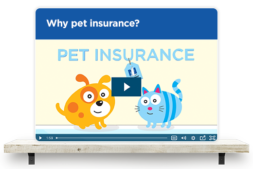 Why pet insurance?