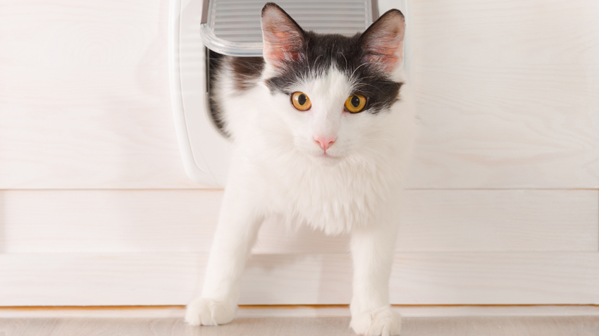 Choosing Pet Doors