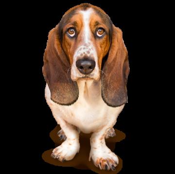Pet Insurance By Nationwide America S Best Pet Vet Insurance