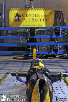 CenterForPetSafety CrashTestDog1