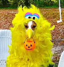 Diy Pet Halloween Costumes Pet Health Insurance Tips