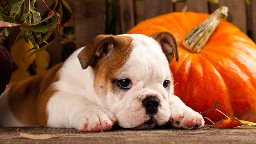 5 Ways to Keep Pets Safe on Halloween
