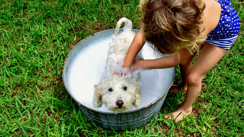 5 Dog Grooming Tips for Families