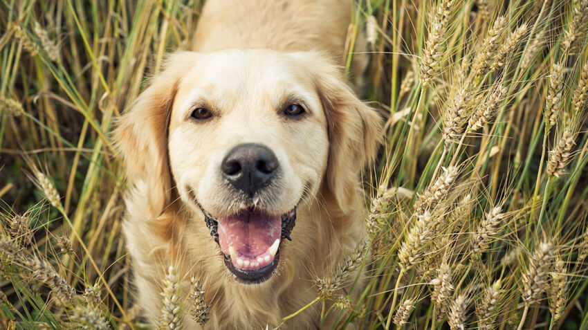 5 Ways to Keep Pets Healthy