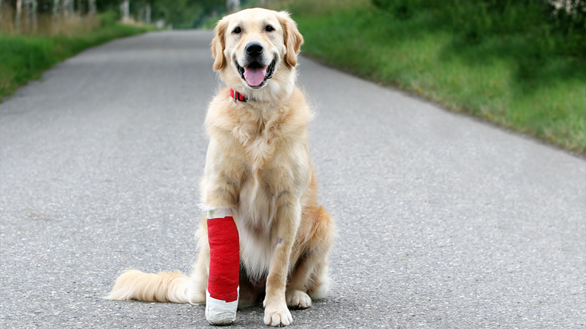 How Can Pet Insurance Help?
