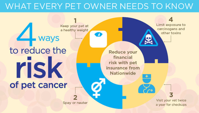 4 ways to reduce the risk of pet cancer