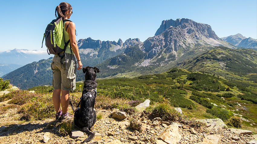 9 essential tips for hiking with your dog