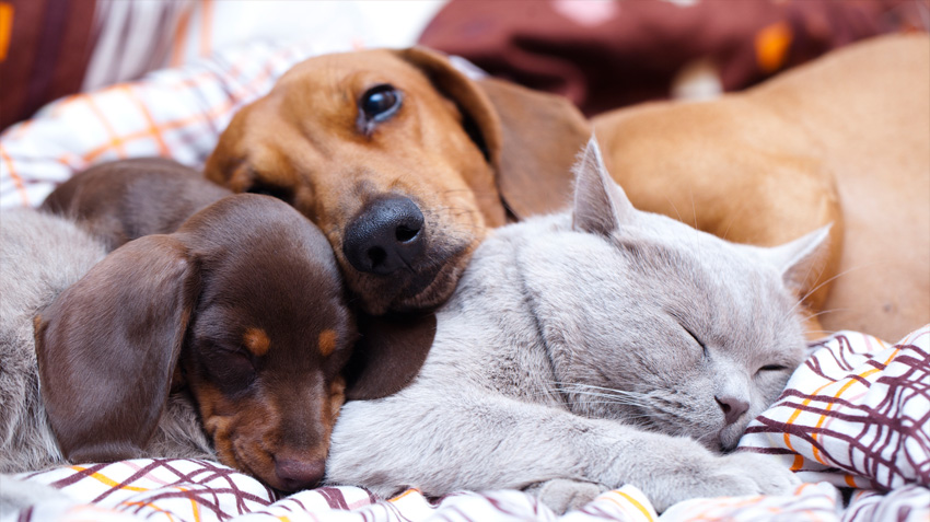 Dog And Cat Relationships Pet Health Insurance Tips