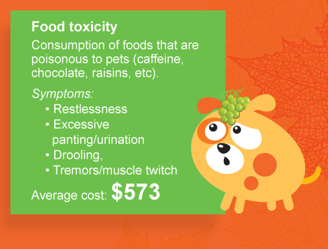Food toxicity is another food related ailment. Consumption of foods that are poisonous to pets (caffeine, chocolate, raisins, etc). Symptoms: Restlessness, Excessive panting/urination, Drooling, Tremors/muscle twitch. Average cost: $573.