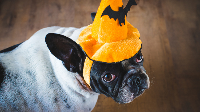 5 Warnings About Pet Costumes