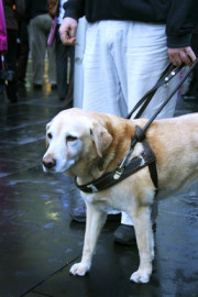 120guidedogwalking