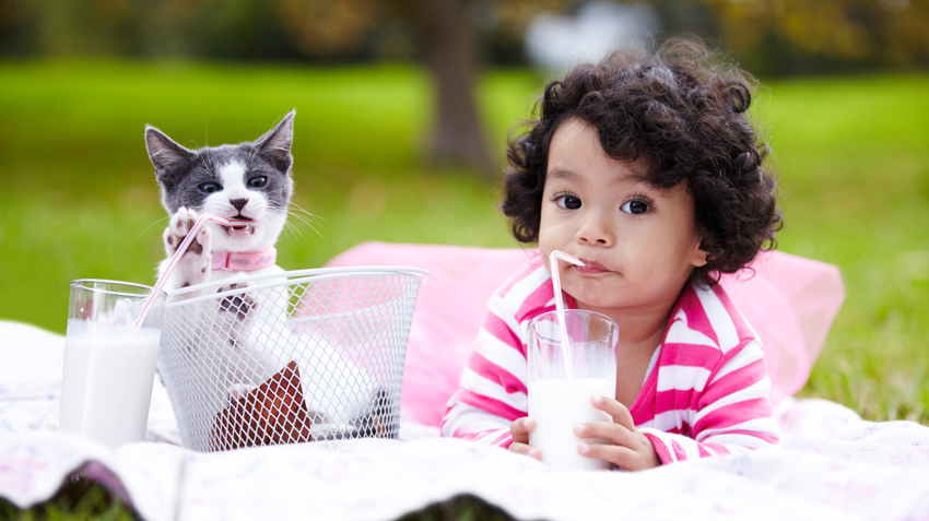 10 Best Cat Breeds for Kids