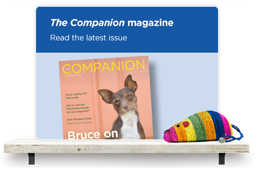 Read the latest issue on our Companion magazine.