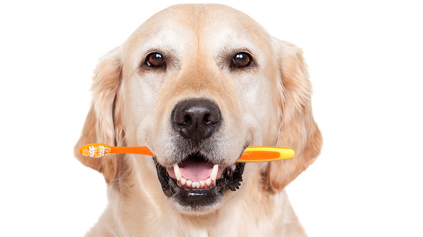 Brush Up on Your Pet's Oral Care