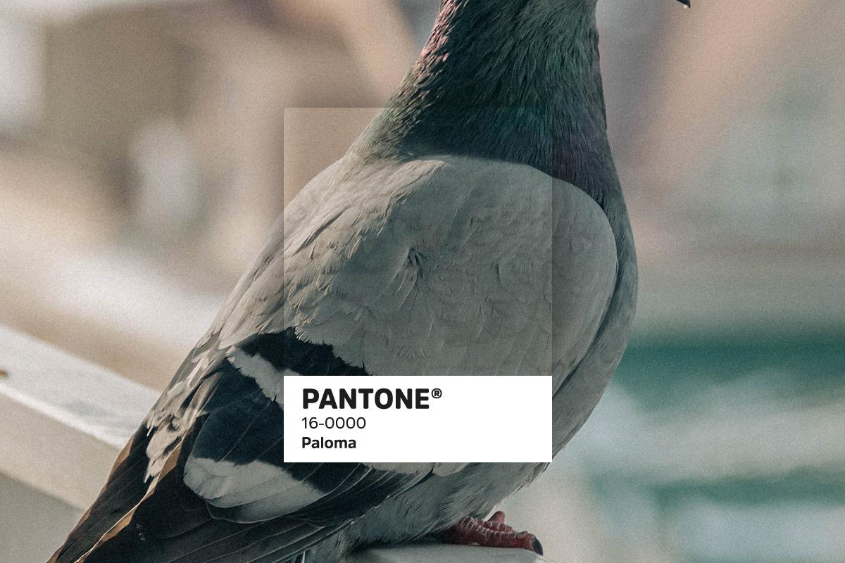 435 Pantonetrends blogbeelden15
