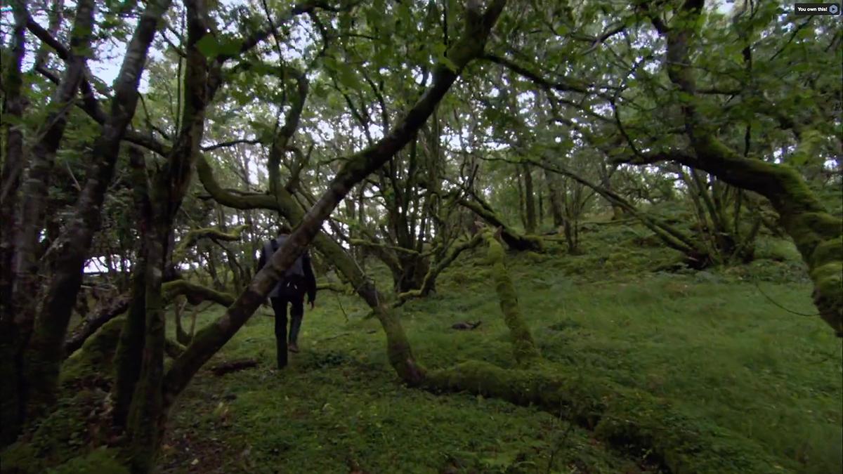 Tim Robinson woods