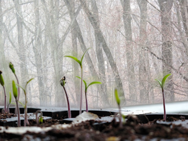spring winter sprouts absonant ajb chaney