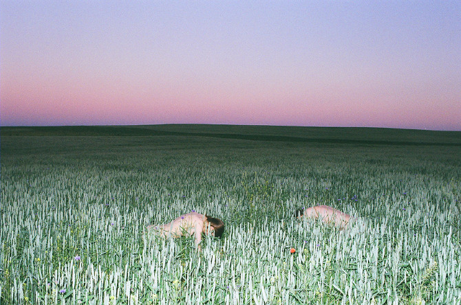 synchrodogs people face down in a green field