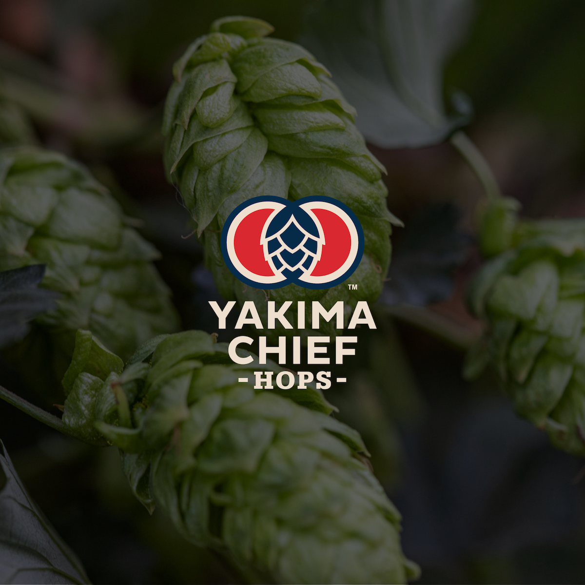 How North America's largest hop supplier, Yakima Chief Hops, increases its digital experience maturity