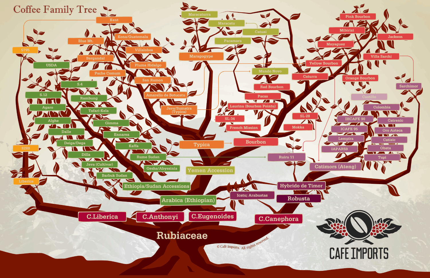 Cafe Imports Coffee Family Tree