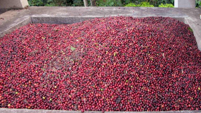 Indian-Coffee-Beans-CC-Abdulla-Al-Muhairi-1920px-768x432
