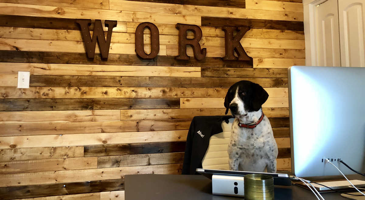 Meet 15 Furry Animals at the World's Most Pet-Friendly Company