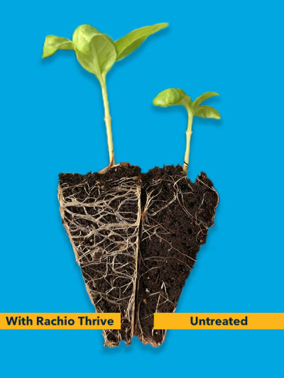 Healthy grass roots with Rachio Thrive