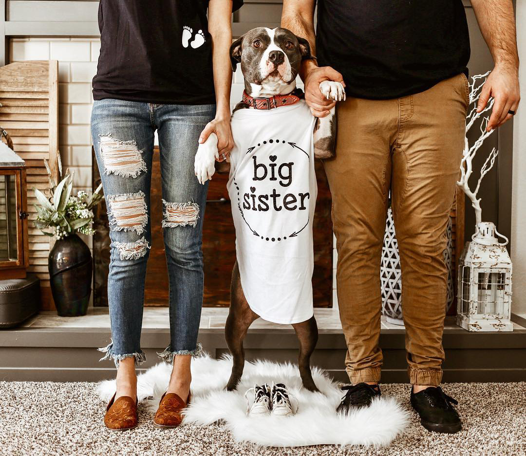 instagram-pregnancy-reveal-announcement-pets